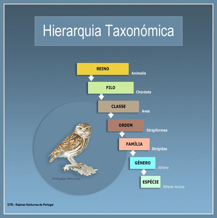 taxonomia2