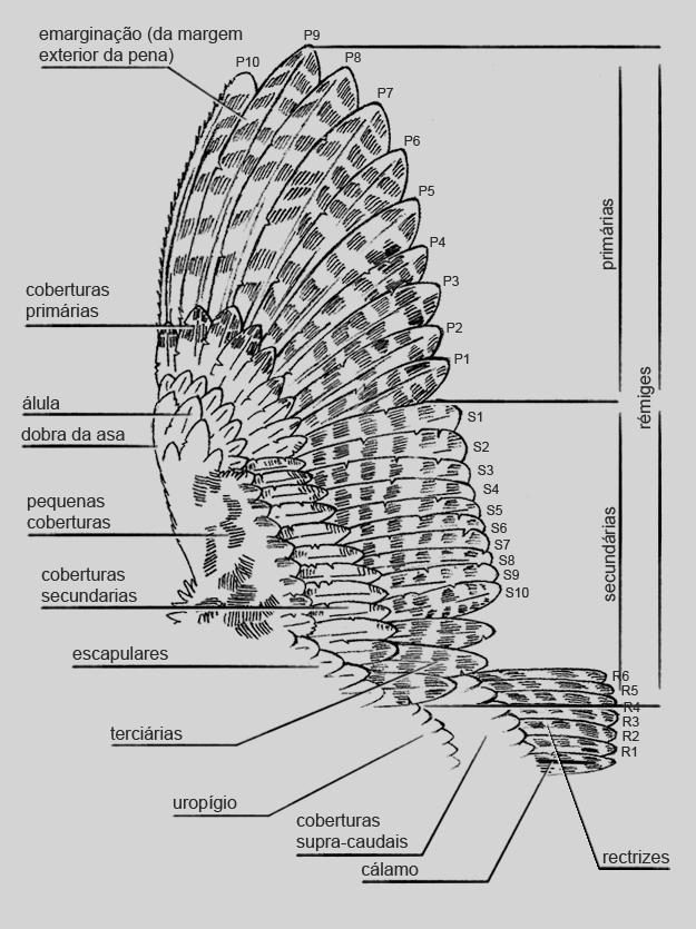 topografia_asa_caudal